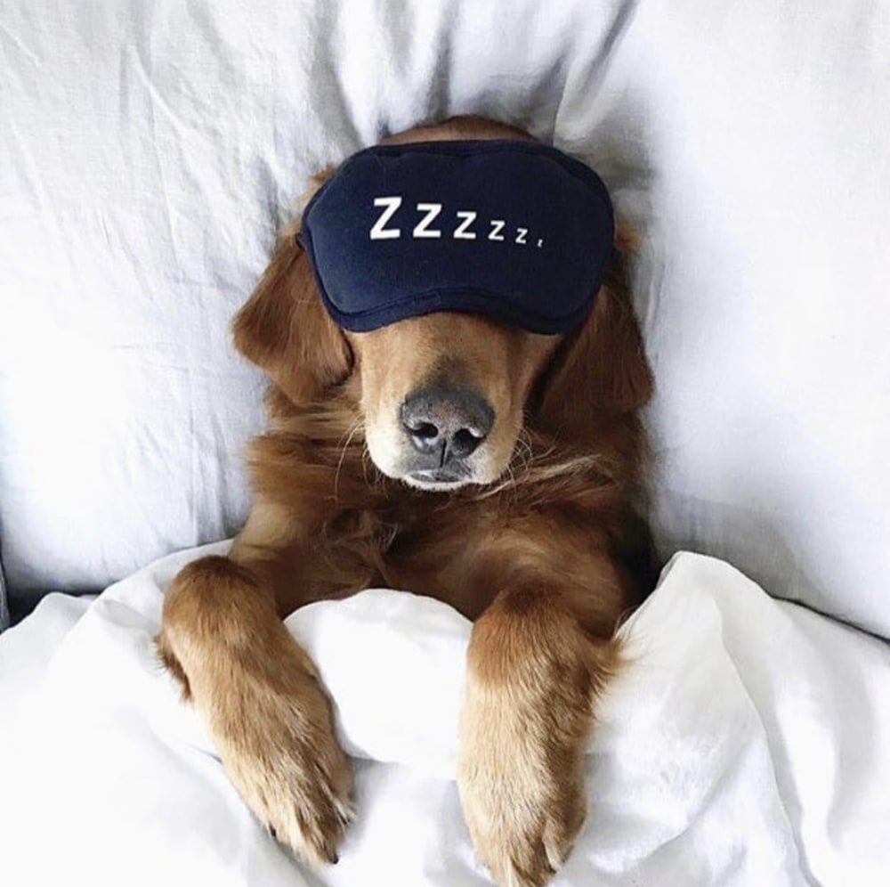 Dog Sleeping in a Bed With a Sleep Mask | Pancakes & Pushups